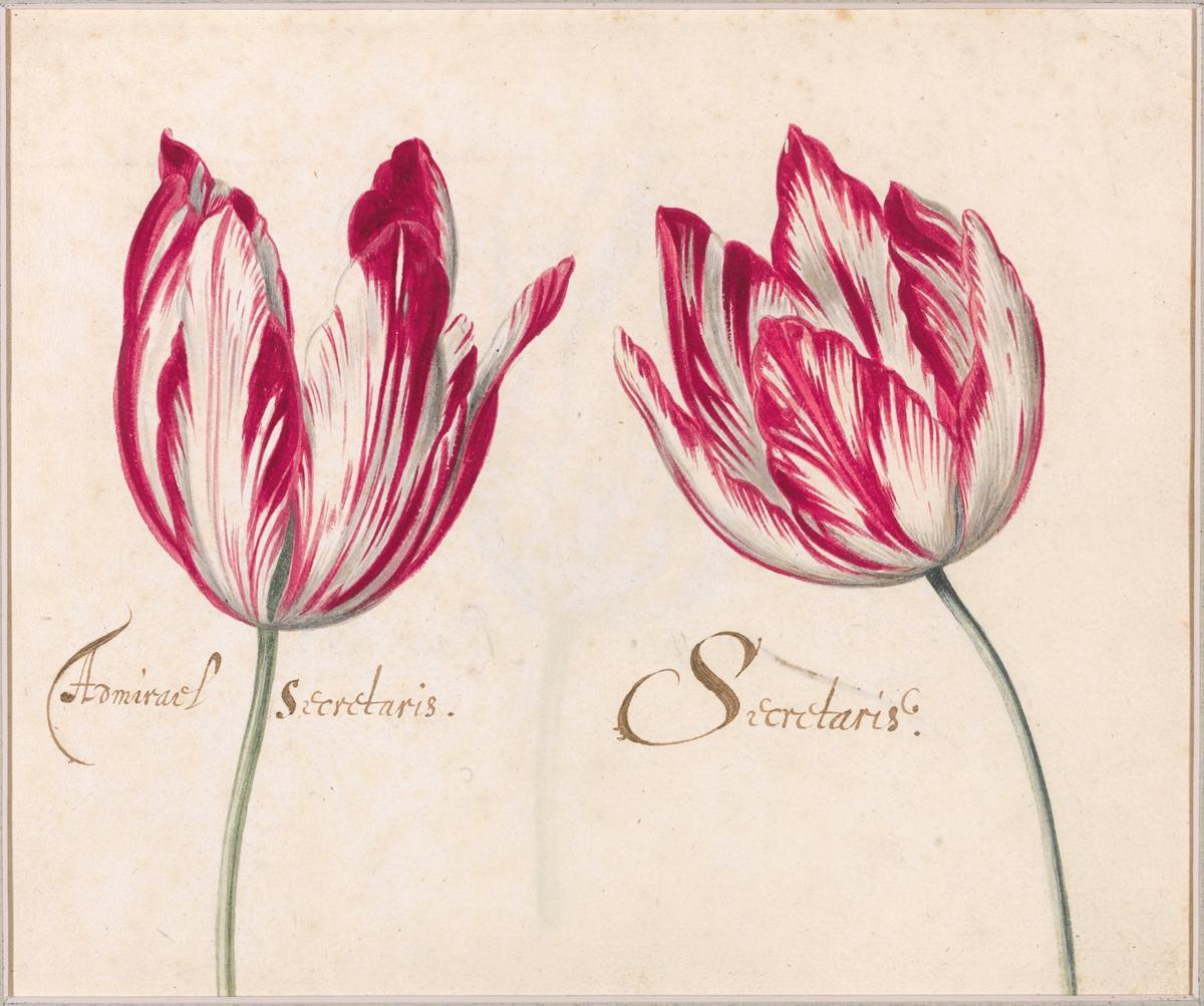 73. Page from the Brandemandus Tulip Album (i)