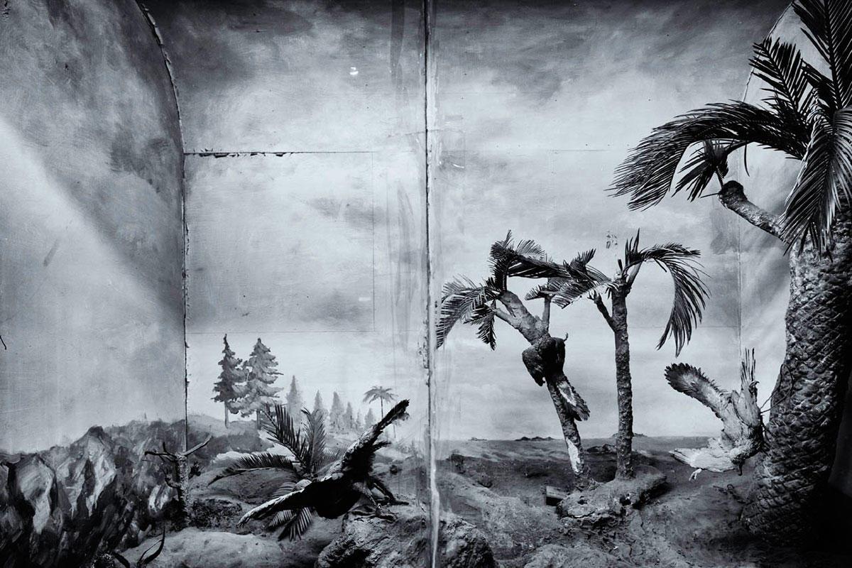 ©-FengMengbo,Archaeopteryx,2012.CourtesyofShanghaiGalleryofArt,Shanghai